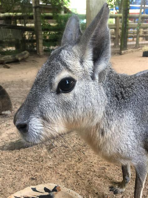 meet wesley  houston zoo