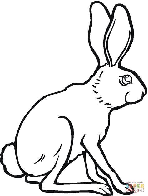 coloring pages jack rabbit sitting jackrabbit coloring online