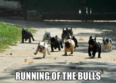 Funny Running Memes - funny pics of dogs running images