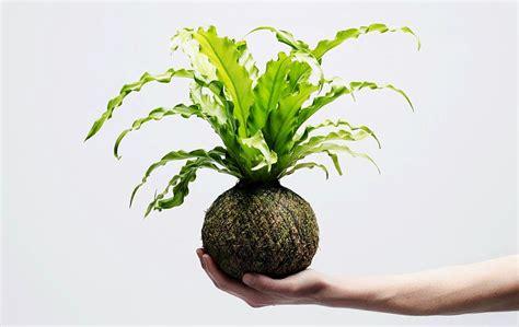 Japanese Indoor Garden Design We Smell The Rain Brings Garden Indoors With Kokedama