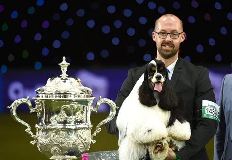 who won the show crufts best in show 2017 is american cocker spaniel afterglow miami metro news