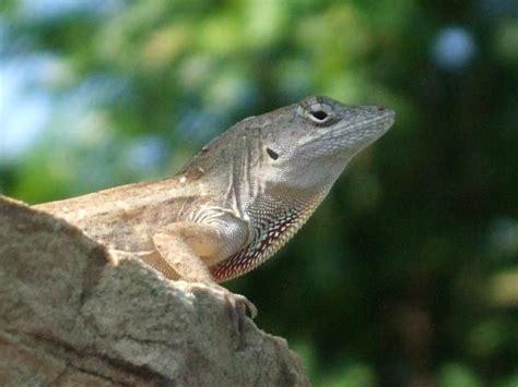 animal gallery  lizards