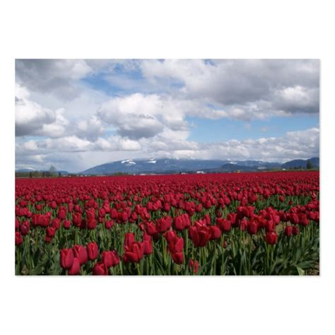 Tulip Card Template by Tulip Field Large Business Cards Pack Of 100 Zazzle