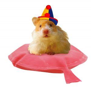 humphrey s pet show panic humphrey s tiny tales books betty birney s