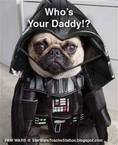 pug wars pug war and on