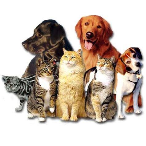 shoo for dogs animais aquarismo disk ra 231 227 o estima 231 227 o petshop ra 231 245 es po 231 os de caldas