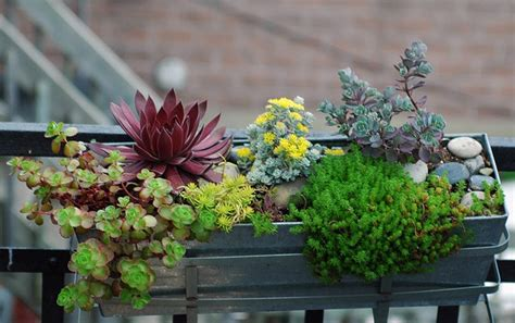 succulent window box succulent window box plants and outdoor projects