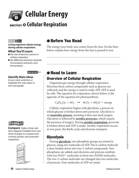 Overview Of Cellular Respiration Worksheet Answers