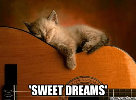 Sweet Memes - sweet dreams cat
