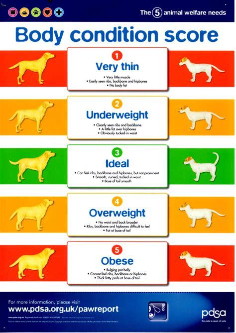 condition score orwell veterinary weight clinics