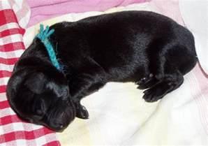 file newborn puppy jpg