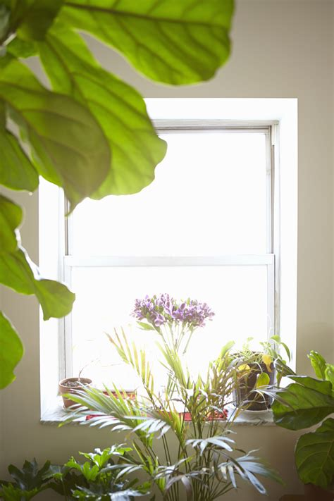 beautiful house plants photo picture 2022 this is the ultimate house plant cheat sheet