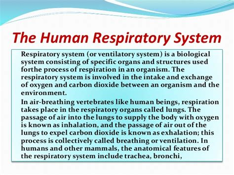 Respiratory Description by The Human Respiratory System