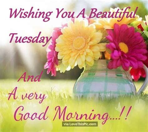 wishing   beautiful tuesday    good morning