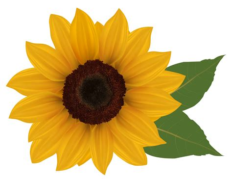 printable sunflower images sunflower clip art free printable free clipart 2 clipartix