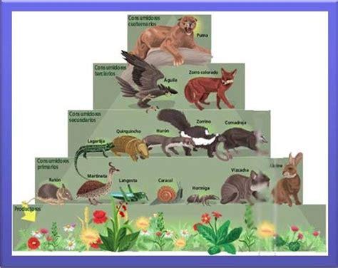 cadenas alimentarias de animales niveles tr 243 ficos tramas y cadenas alimentarias