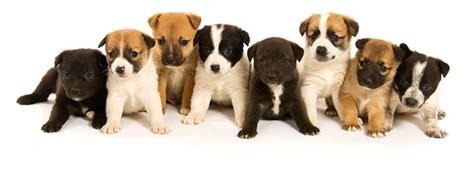 imagenes de animales juguetones mascotas pethouse