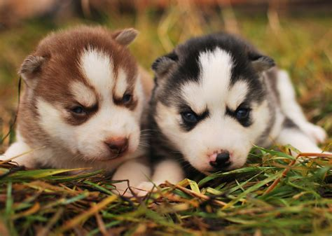 photos of puppies puppies puppies photo 29017060 fanpop