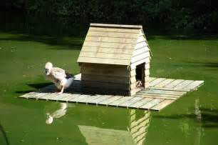 Mallard Duck House Plans Home Ideas