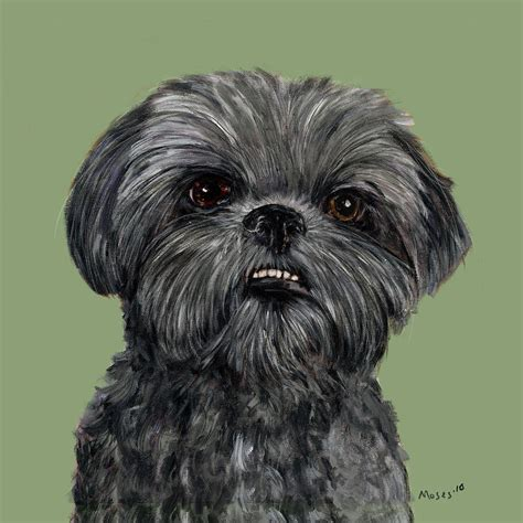 shih tzu painting charcoal shih tzu painting by dale moses