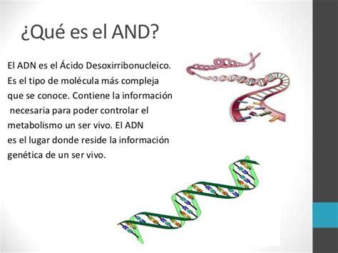 que es el layout pdf transcripci 243 n y traducci 243 n del adn