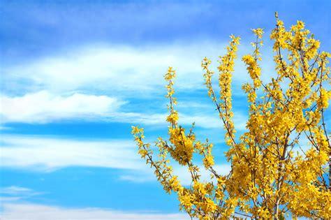 fiori australiani funzionano fiori gialli bellissimi e diversi fai da te in giardino