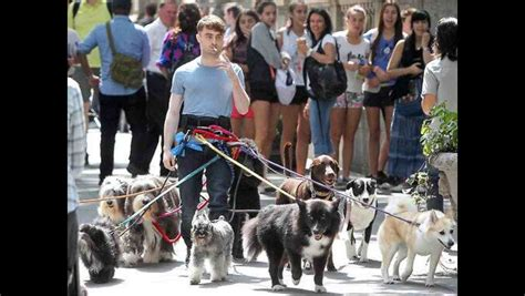 daniel radcliffe dogs ok seriously now daniel radcliffe walking a dozen dogs while a cigarette i