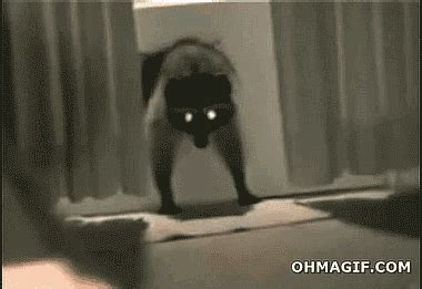 epic film cat3 funny raccoon stealing doormat funny gifs and animated gifs