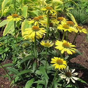 sun foliage plants top new sun loving perennials for 2014