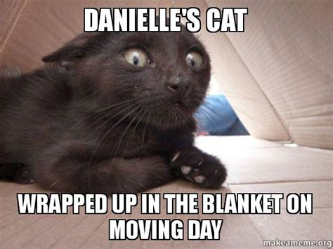 Meme Blanket - danielle s cat wrapped up in the blanket on moving day