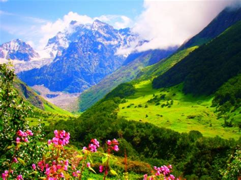 wallpaper flower valley the valley of flowers uttarakhand mountains nature