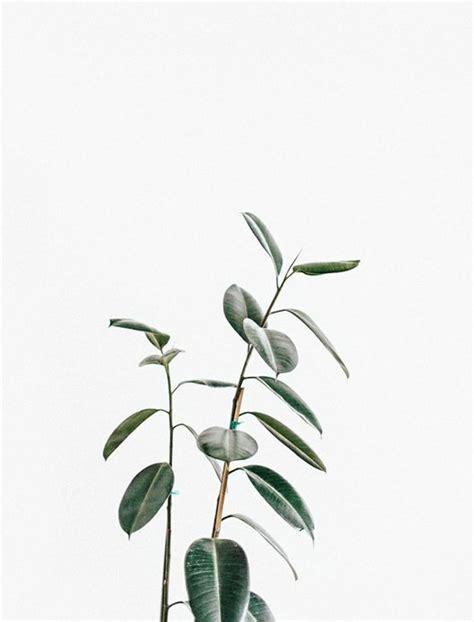 minimalist plants botanical minimal minimal living minimalist tag
