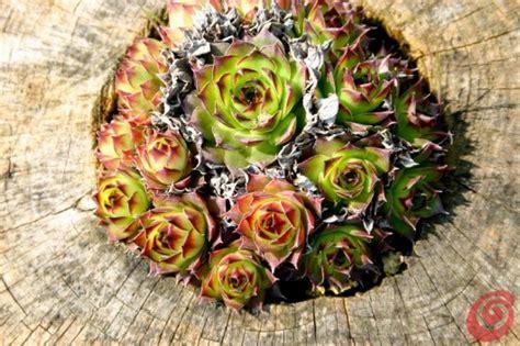 decorazioni per giardino fai da te le decorazioni per il giardino quelle fai da te casa e