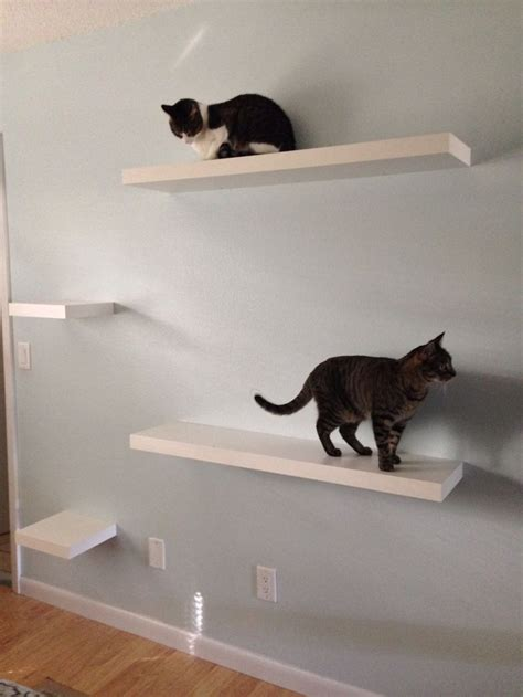 1000 ideas about cat stairs on cat wall