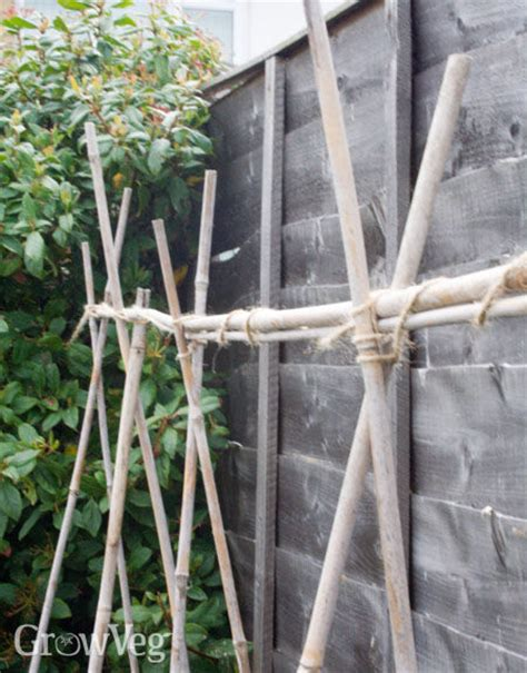 wire supports for climbing plants supports for climbing beans and peas