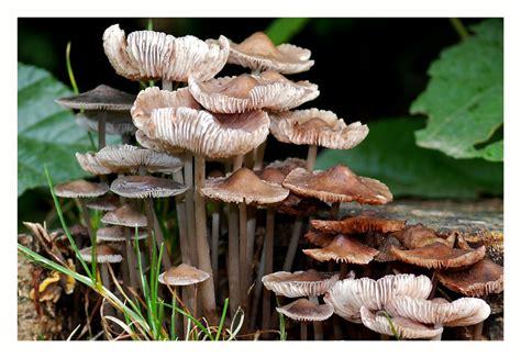 pilze im garten pflanzen pilze im garten foto bild pflanzen pilze flechten