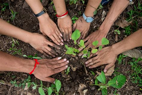 plant yet more trees in shah alam clean malaysia
