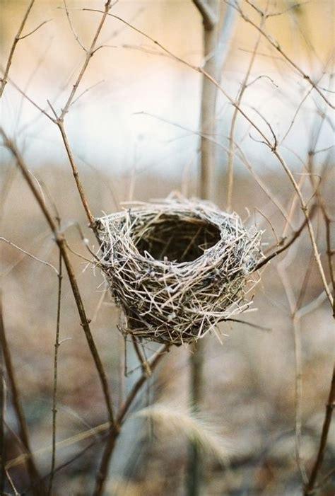 empty nest bird abodes