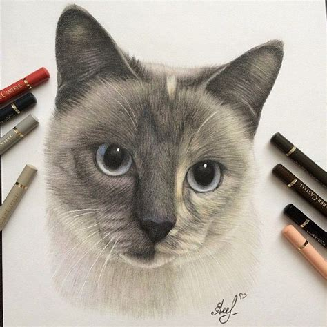 Cat Pencil cat pencil drawing by gorba image preview image