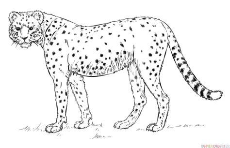 Realistic Cheetah Coloring Pages by How To Draw A Realistic Cheetah Step By Step Drawing