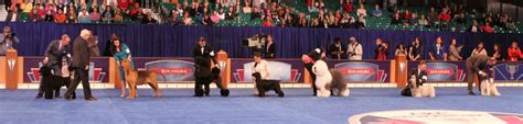 akc show shows akc national chionship american kennel club
