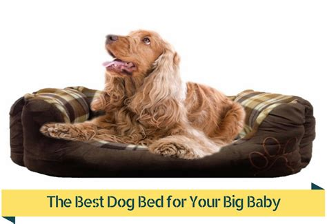 best puppy for baby best beds 10 best large beds best beds models best beds for
