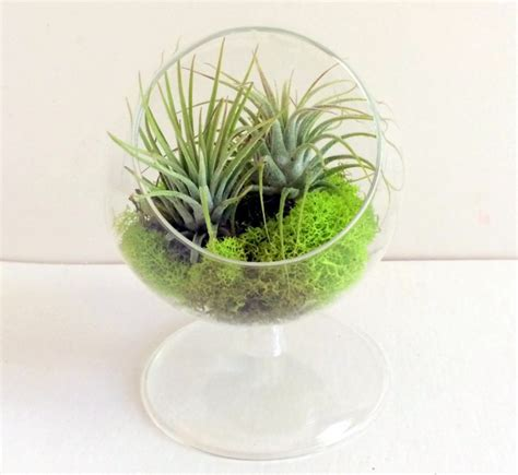 Wall Planter where to buy air plants online