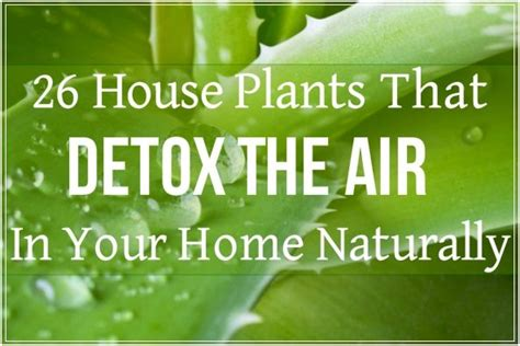 Palm Detox by 26 Houseplants That Detox Your Home 26 House Plants That
