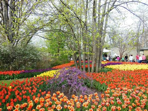 Blooms Tunes Event In Spring April Picture Of Botanical Gardens Cincinnati