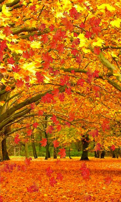 Fall Live Wallpaper Android by Fall Live Wallpaper And Daydream Free Android Live