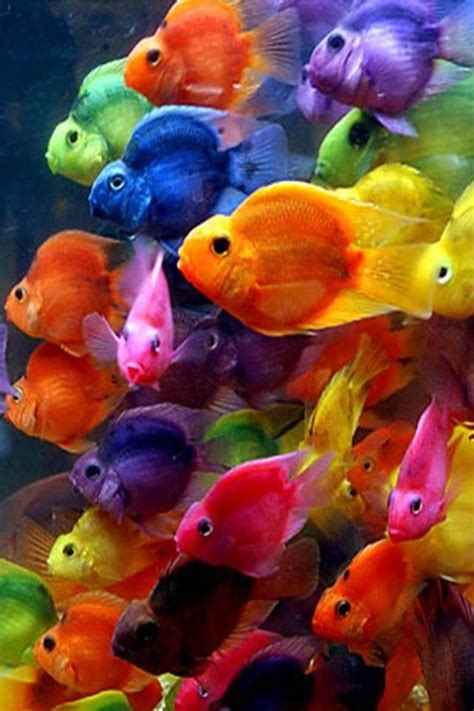 wallpaper for iphone fish colorful fish iphone wallpaper iphone wallpapers 4