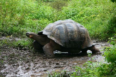 imagenes animales galapagos los animales de las islas gal 225 pagos a trav 233 s del mundo