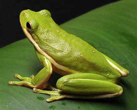 una rana a frog 8426350933 rana la caseta de trufa