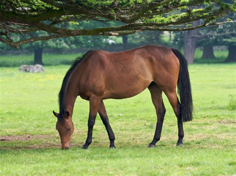 what does it when a eats grass what do horses eat images